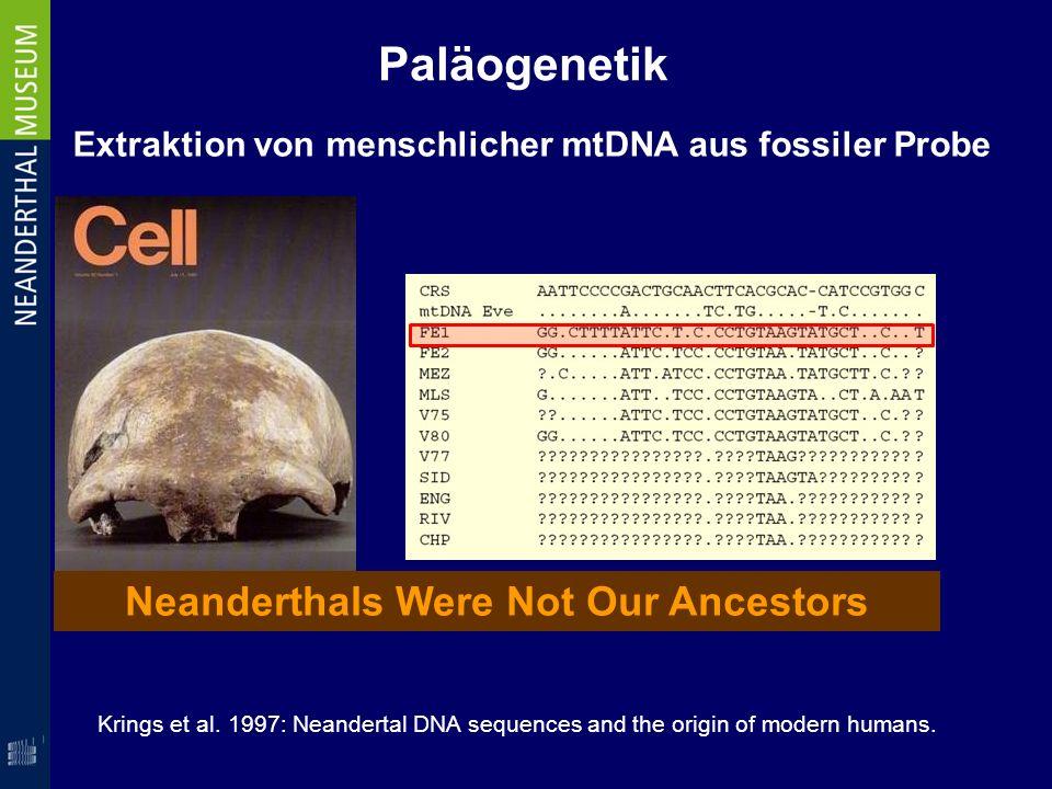 Paläogenetik Extraktion von menschlicher mtDNA aus fossiler Probe Krings et al. 1997: Neandertal DNA sequences and the origin of modern humans. Neande
