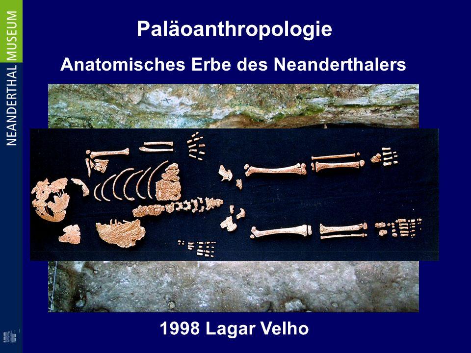 Paläoanthropologie 1998 Lagar Velho Anatomisches Erbe des Neanderthalers