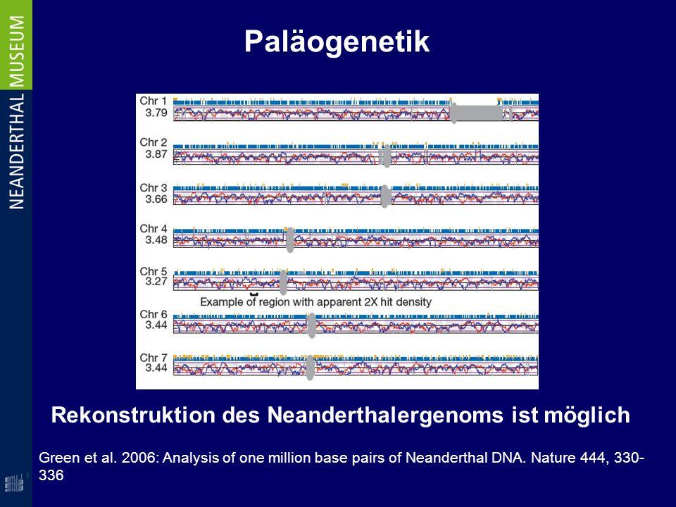 Paläogenetik Green et al. 2006: Analysis of one million base pairs of Neanderthal DNA. Nature 444, 330- 336 Rekonstruktion des Neanderthalergenoms ist
