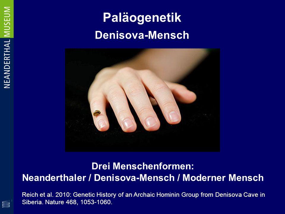 Paläogenetik Denisova-Mensch Drei Menschenformen: Neanderthaler / Denisova-Mensch / Moderner Mensch Reich et al. 2010: Genetic History of an Archaic H