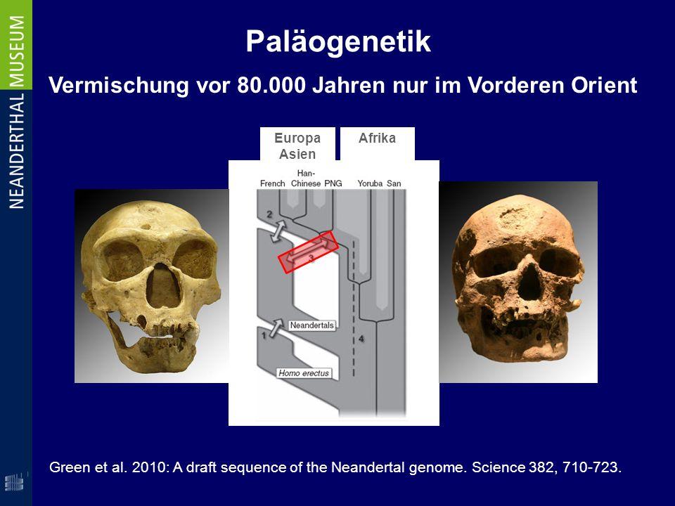 Paläogenetik Vermischung vor 80.000 Jahren nur im Vorderen Orient Europa Asien Afrika Green et al. 2010: A draft sequence of the Neandertal genome. Sc