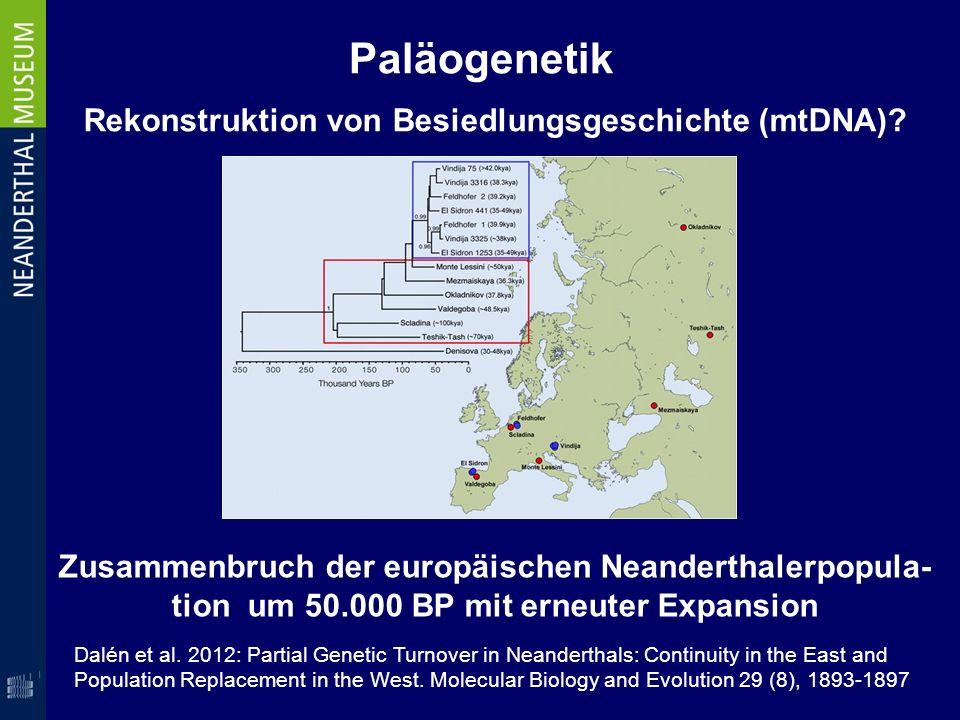 Paläogenetik Rekonstruktion von Besiedlungsgeschichte (mtDNA)? Zusammenbruch der europäischen Neanderthalerpopula- tion um 50.000 BP mit erneuter Expa