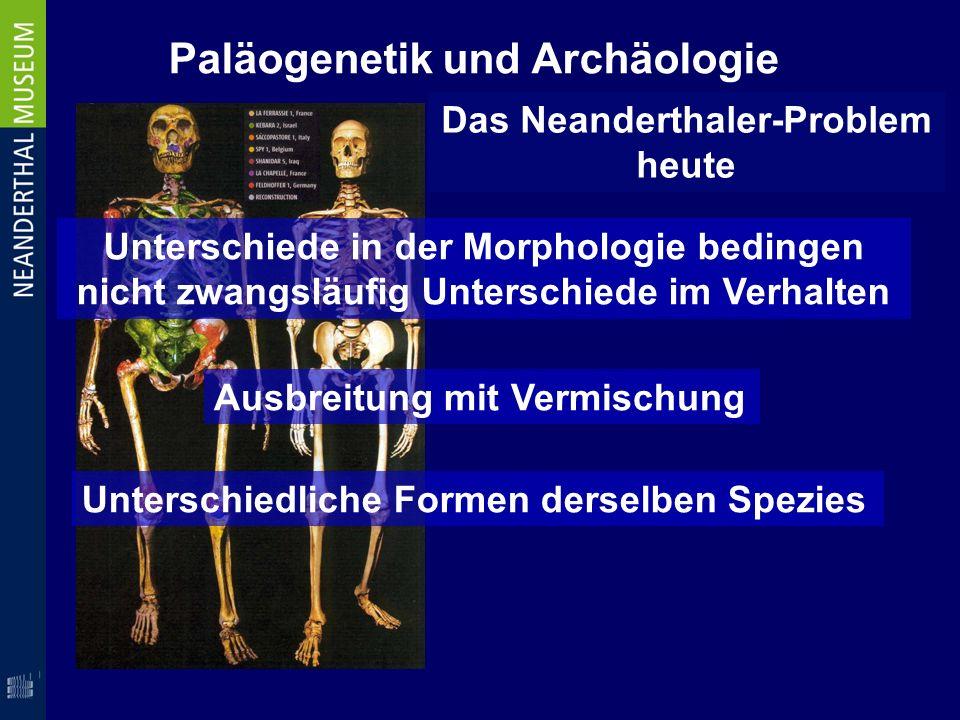 Paläogenetik und Archäologie Das Neanderthaler-Problem heute Unterschiede in der Morphologie bedingen nicht zwangsläufig Unterschiede im Verhalten Aus