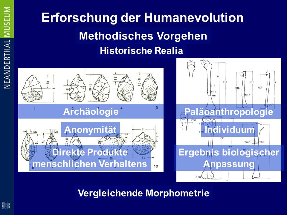 Erforschung der Humanevolution Methodisches Vorgehen Historische Realia Archäologie Paläoanthropologie AnonymitätIndividuum Ergebnis biologischer Anpa