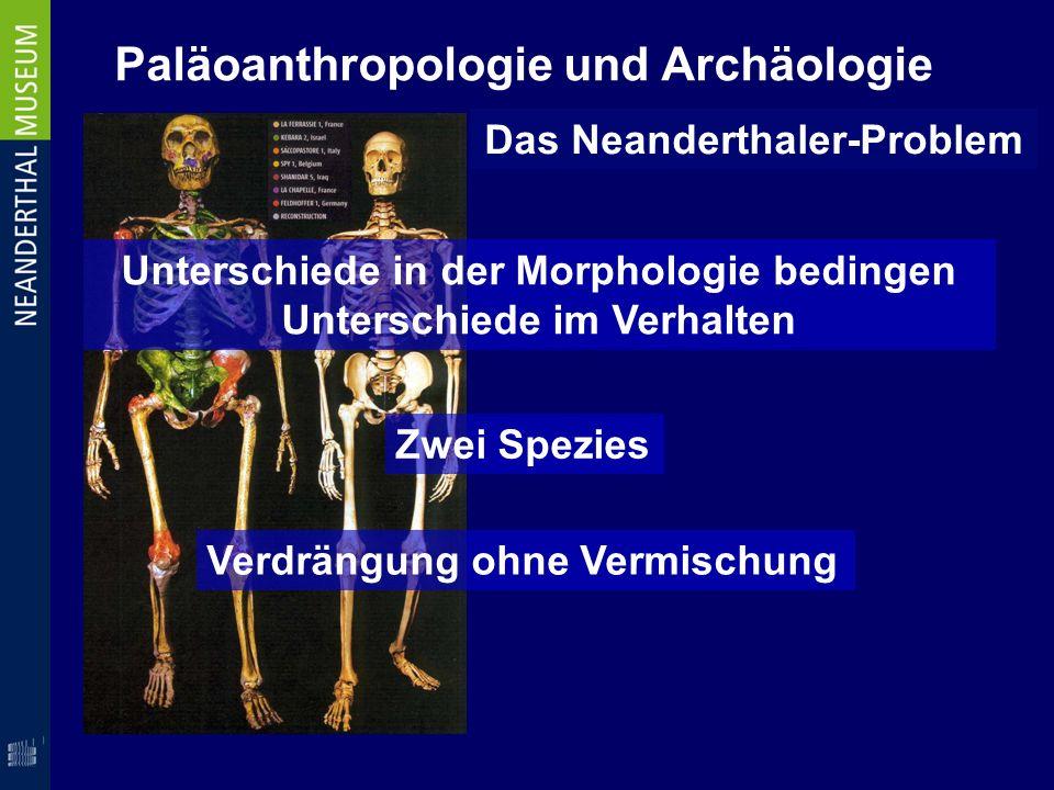 Paläoanthropologie und Archäologie Das Neanderthaler-Problem Unterschiede in der Morphologie bedingen Unterschiede im Verhalten Verdrängung ohne Vermi
