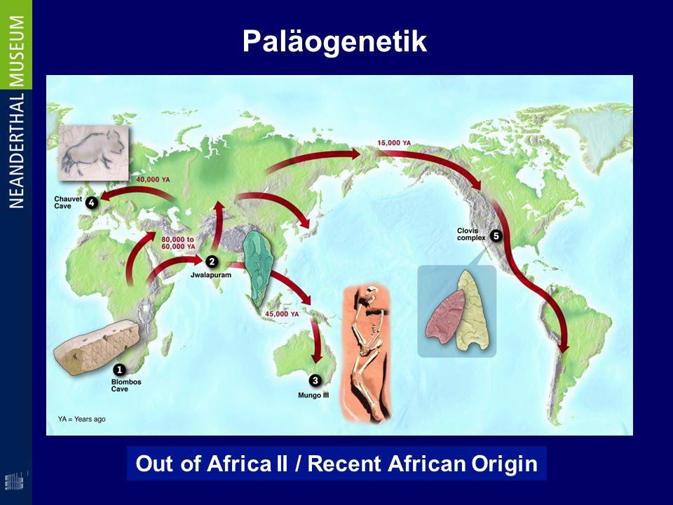 Wir können idealtypisch auf eine afrikanische Frau zurückgeführt werden Paläogenetik Afrikanische Eva Out of Africa II / Recent African Origin
