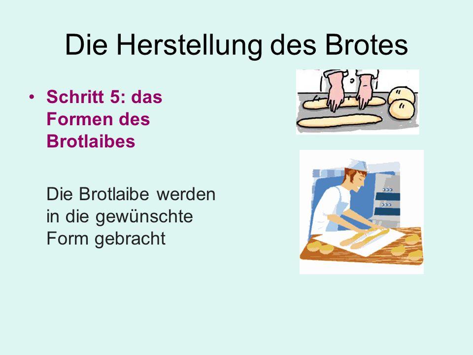 Die Herstellung des Brotes Schritt 5: das Formen des Brotlaibes Die Brotlaibe werden in die gewünschte Form gebracht