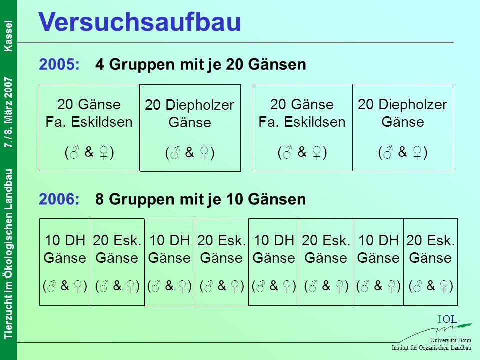 IOL Universität Bonn Institut für Organischen Landbau Tierzucht im Ökologischen Landbau7. / 8. März 2007Kassel Versuchsaufbau 20 Diepholzer Gänse ( &