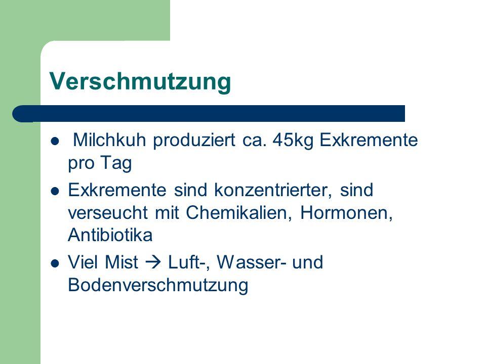 Verschmutzung Milchkuh produziert ca. 45kg Exkremente pro Tag Exkremente sind konzentrierter, sind verseucht mit Chemikalien, Hormonen, Antibiotika Vi
