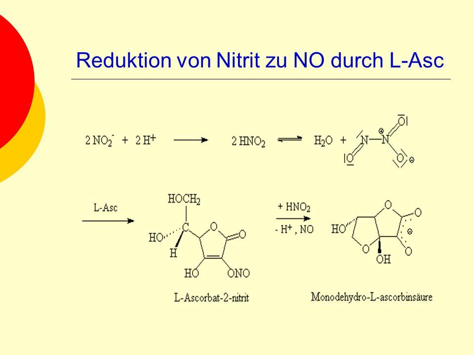 Reduktion von Nitrit zu NO durch L-Asc