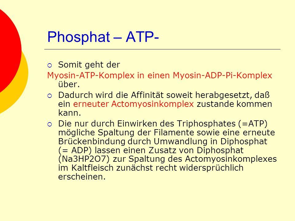 Phosphat – ATP- Somit geht der Myosin-ATP-Komplex in einen Myosin-ADP-Pi-Komplex über. Dadurch wird die Affinität soweit herabgesetzt, daß ein erneute
