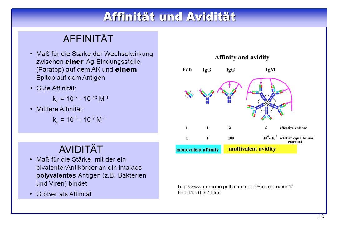 10 AFFINITÄT Maß für die Stärke der Wechselwirkung zwischen einer Ag-Bindungsstelle (Paratop) auf dem AK und einem Epitop auf dem Antigen Gute Affinit