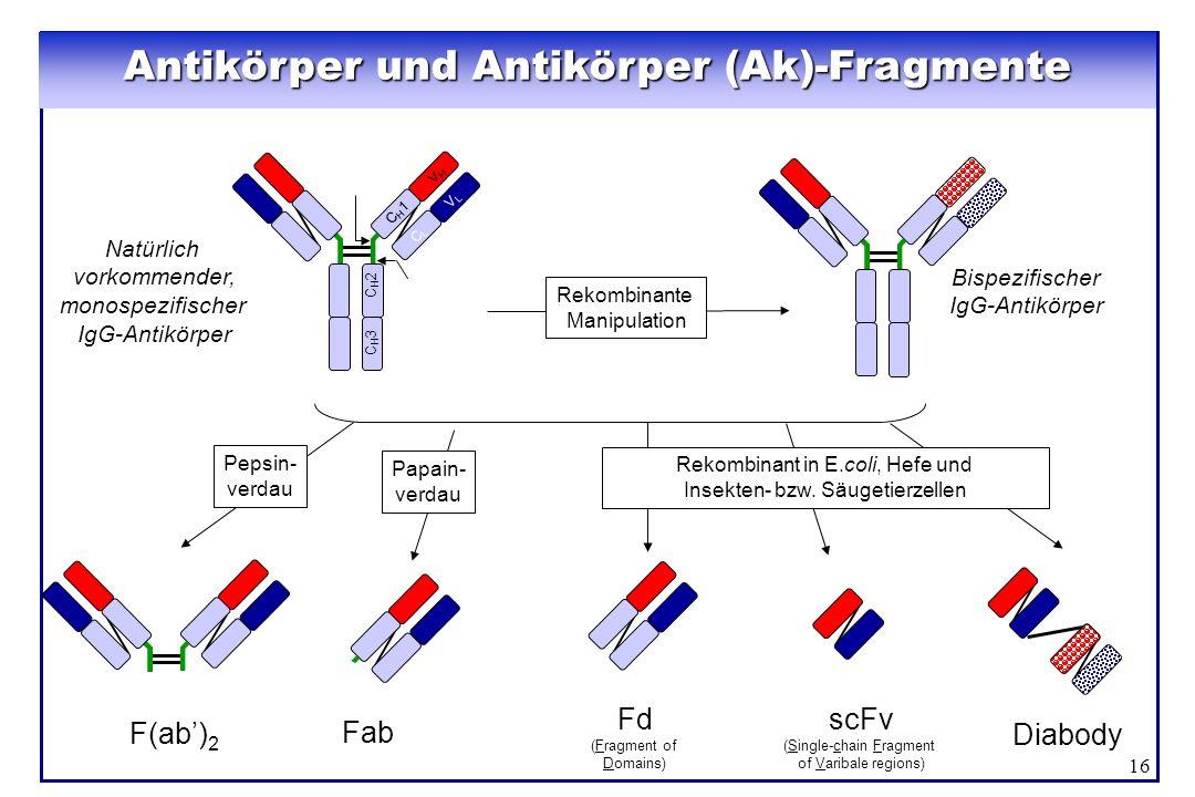 16 Natürlich vorkommender, monospezifischer IgG-Antikörper Rekombinante Manipulation Antikörper und Antikörper (Ak)-Fragmente C H 1 V H C L V L C H 3