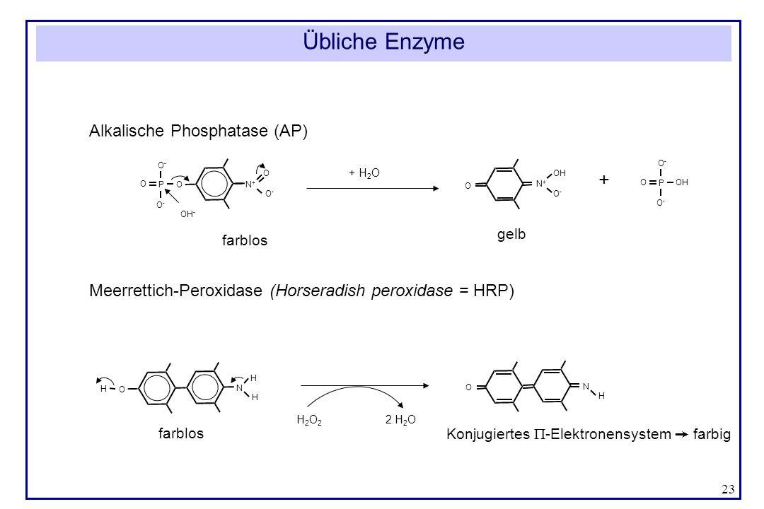 23 Übliche Enzyme Alkalische Phosphatase (AP) Meerrettich-Peroxidase (Horseradish peroxidase = HRP) N O H H H N O H H 2 O 2 2 H 2 O Konjugiertes -Elek