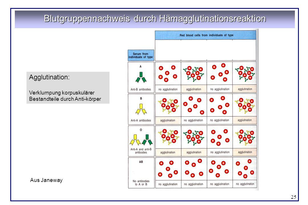 25 Blutgruppennachweis durch Hämagglutinationsreaktion Agglutination: Verklumpung korpuskulärer Bestandteile durch Anti-körper Aus Janeway