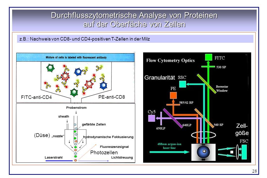 28 Durchflusszytometrische Analyse von Proteinen auf der Oberfäche von Zellen Aus Janeway, Immunobiology Zellgöße Granularität Rot Grün z.B.: Nachweis