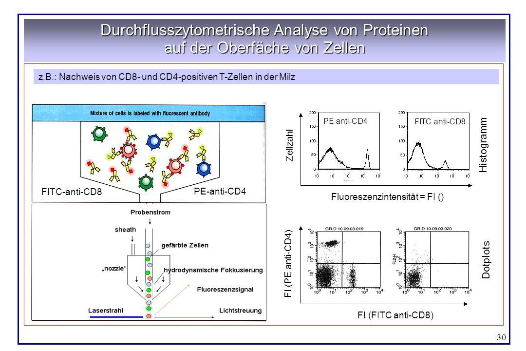 30 Durchflusszytometrische Analyse von Proteinen auf der Oberfäche von Zellen Aus Janeway, Immunobiology Zellgöße Granularität Rot Grün z.B.: Nachweis
