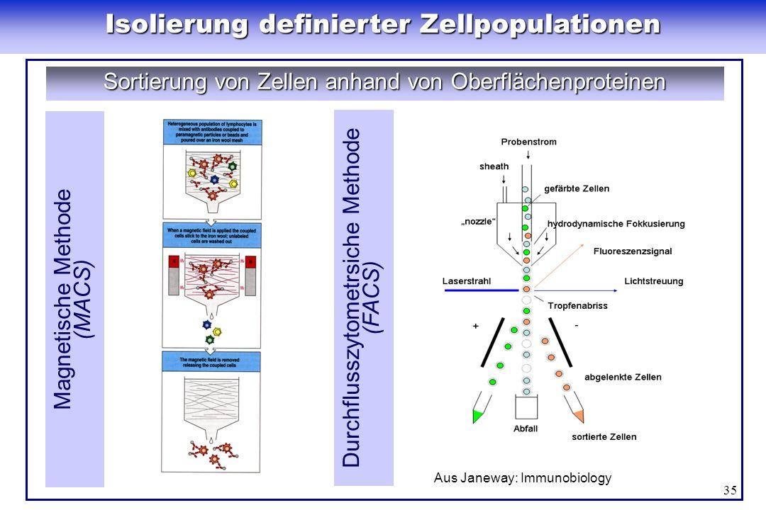 35 Isolierung definierter Zellpopulationen Sortierung von Zellen anhand von Oberflächenproteinen Magnetische Methode (MACS) Durchflusszytometrsiche Me