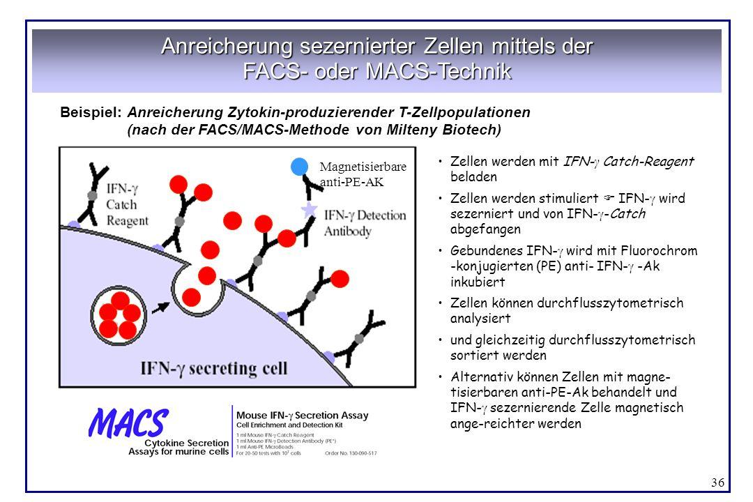 36 Anreicherung sezernierter Zellen mittels der FACS- oder MACS-Technik Beispiel:Anreicherung Zytokin-produzierender T-Zellpopulationen (nach der FACS
