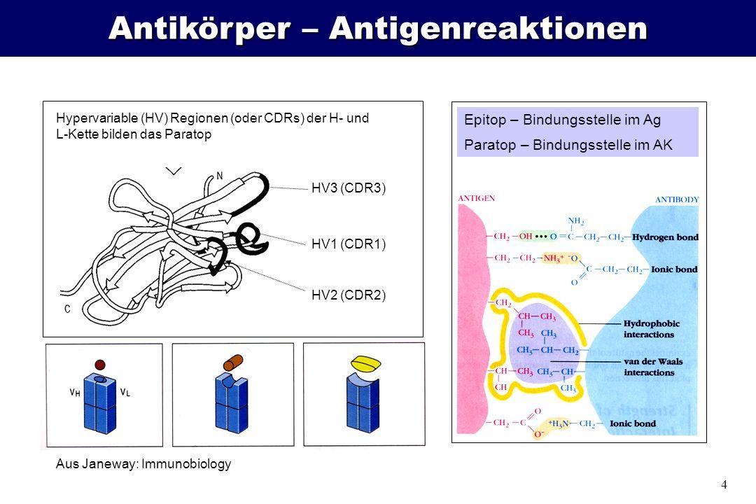 4 Antikörper – Antigenreaktionen HV2 (CDR2) Epitop – Bindungsstelle im Ag Paratop – Bindungsstelle im AK HV3 (CDR3) HV1 (CDR1) Aus Janeway: Immunobiol