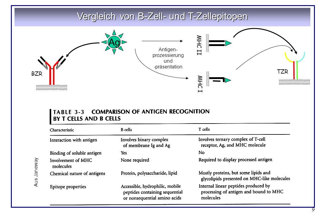 9 Vergleich von B-Zell- und T-Zellepitopen BZR TZR Ag MHC II MHC I Antigen- prozessierung und -präsentation Aus Janeway