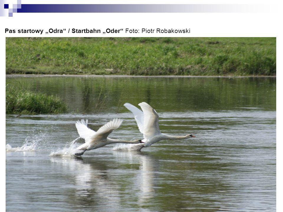 Rzeka z polskiej perspektywy Der Fluss aus polnischer Perspektive Foto: Susanne Albani