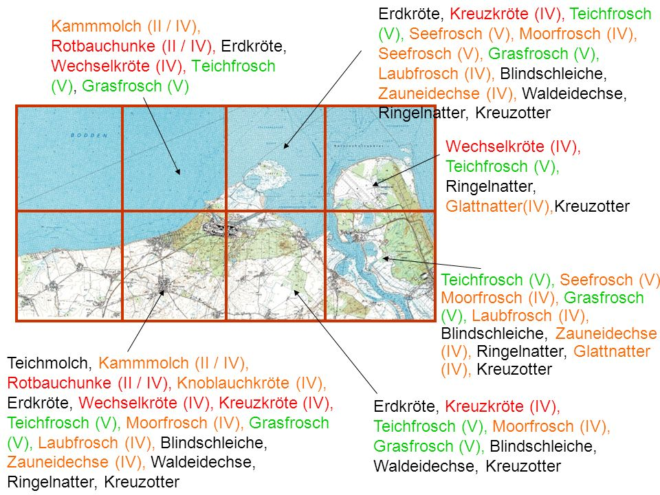 Kammmolch (II / IV), Rotbauchunke (II / IV), Erdkröte, Wechselkröte (IV), Teichfrosch (V), Grasfrosch (V) Erdkröte, Kreuzkröte (IV), Teichfrosch (V),
