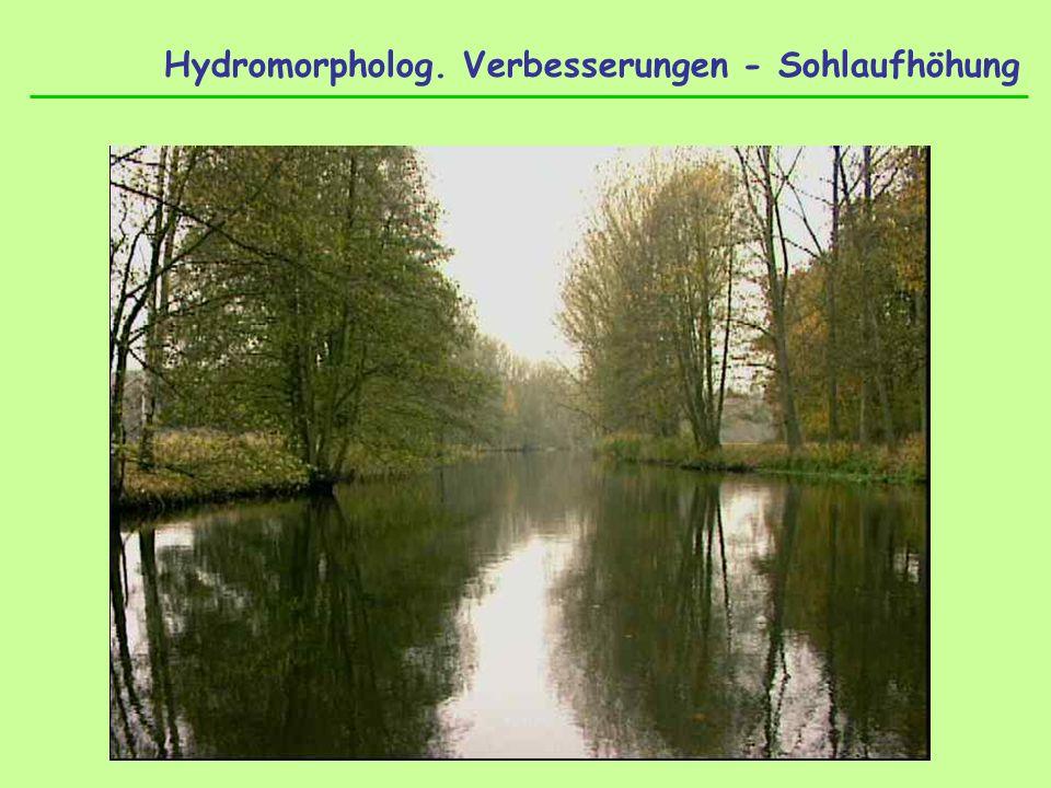 Hydromorpholog. Verbesserungen - Sohlaufhöhung