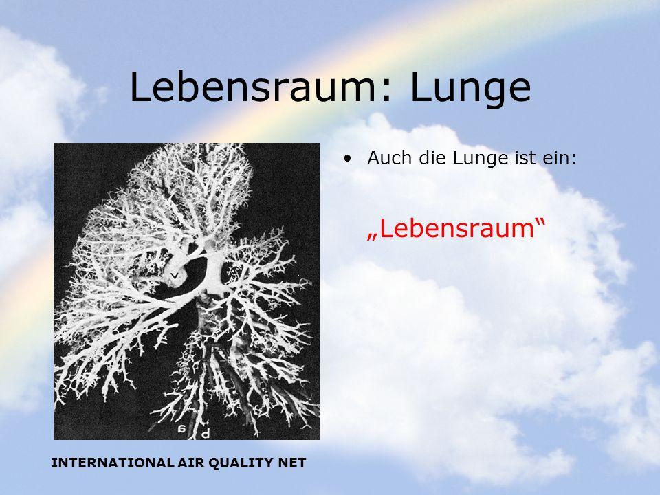 INTERNATIONAL AIR QUALITY NET Lebensraum: Lunge Auch die Lunge ist ein: Lebensraum
