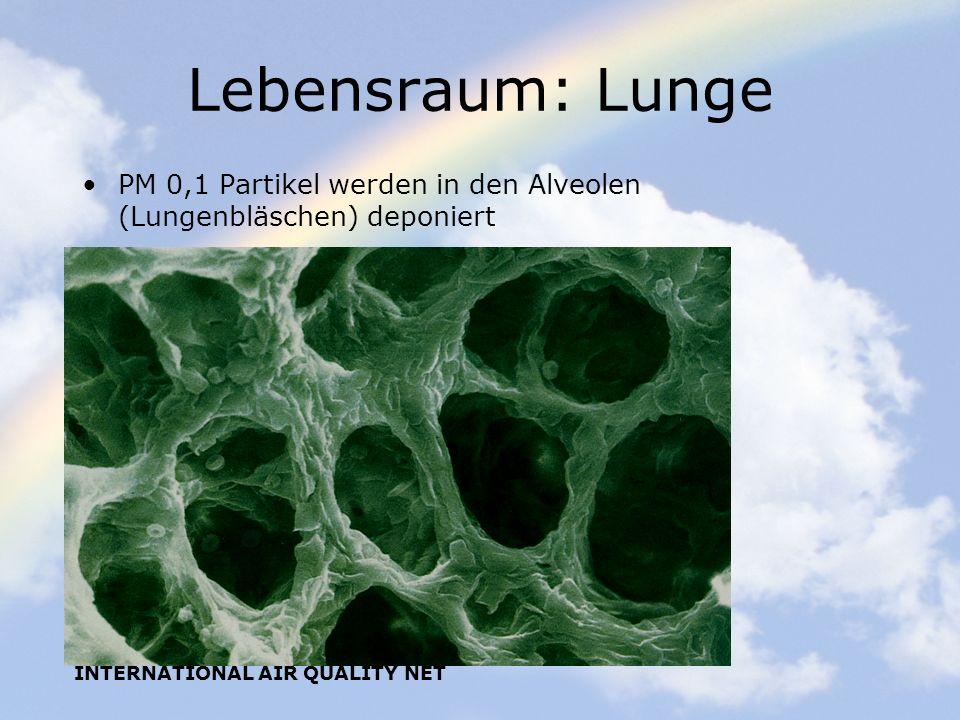 INTERNATIONAL AIR QUALITY NET Lebensraum: Lunge PM 0,1 Partikel werden in den Alveolen (Lungenbläschen) deponiert