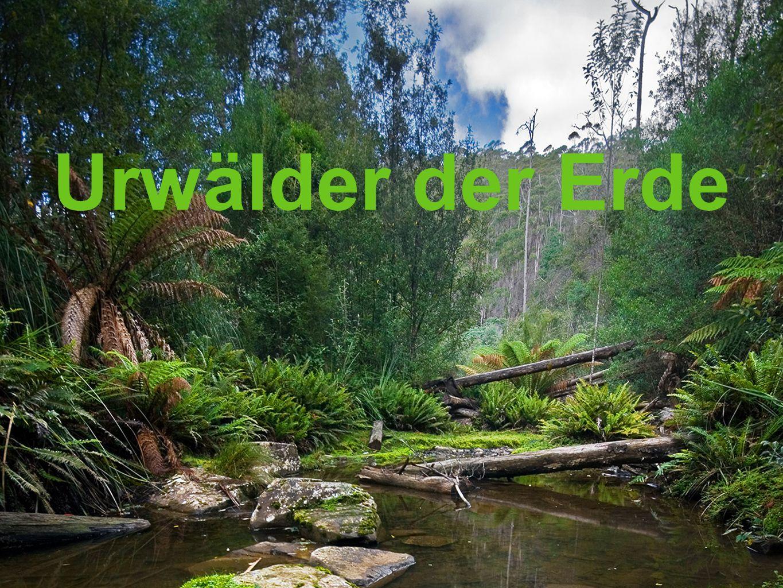 Urwälder der Erde