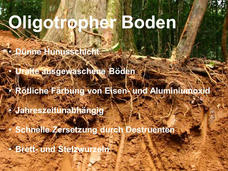 Oligotropher Boden Dünne Hunusschicht Uralte ausgewaschene Böden Rötliche Färbung von Eisen- und Aluminiumoxid Jahreszeitunabhängig Schnelle Zersetzun