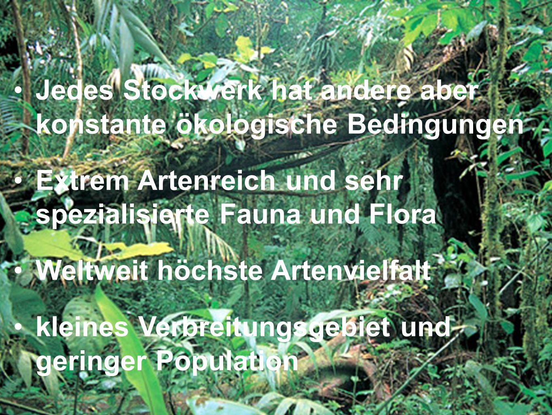 Jedes Stockwerk hat andere aber konstante ökologische Bedingungen Extrem Artenreich und sehr spezialisierte Fauna und Flora Weltweit höchste Artenviel
