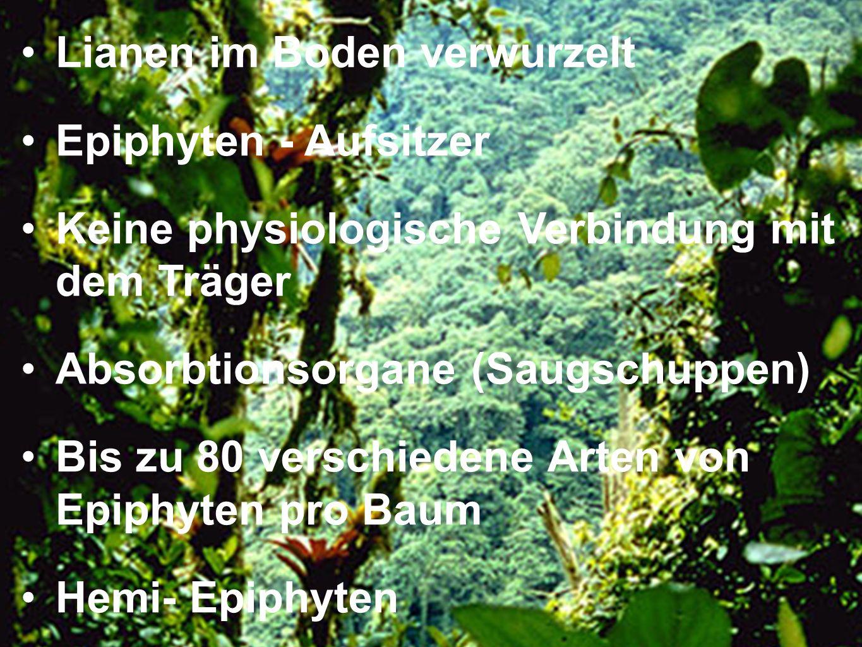Lianen im Boden verwurzelt Epiphyten - Aufsitzer Keine physiologische Verbindung mit dem Träger Absorbtionsorgane (Saugschuppen) Bis zu 80 verschieden