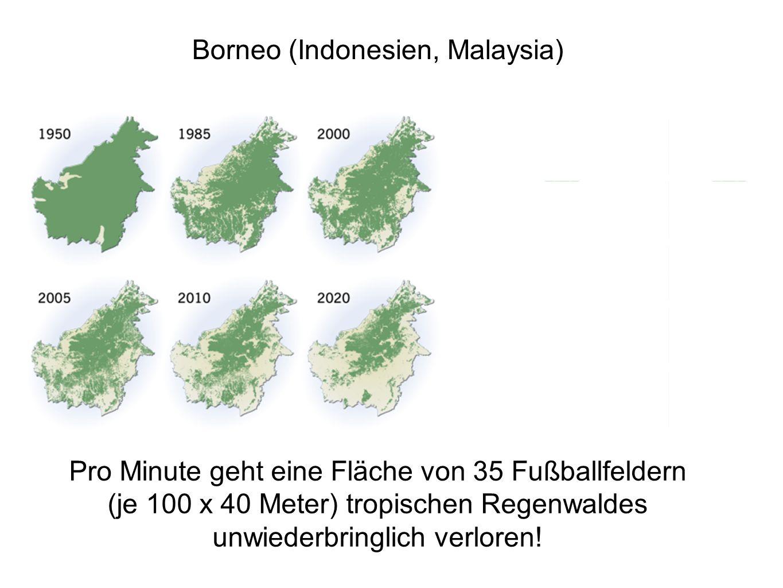 Borneo (Indonesien, Malaysia) Pro Minute geht eine Fläche von 35 Fußballfeldern (je 100 x 40 Meter) tropischen Regenwaldes unwiederbringlich verloren!