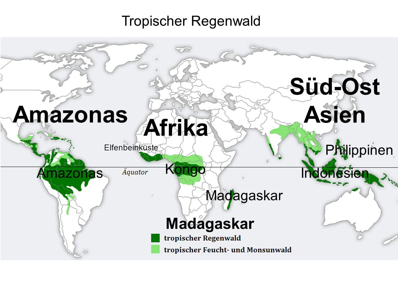 Tropischer Regenwald Amazonas Afrika Kongo Süd-Ost Asien Indonesien Madagaskar Philippinen Elfenbeinküste