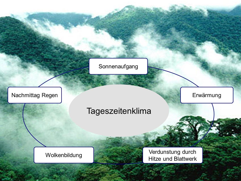 Tropisches Universum Vegetation Gliederung in Stockwerke Baumriesen bis zu 60 m Kronendach ca.