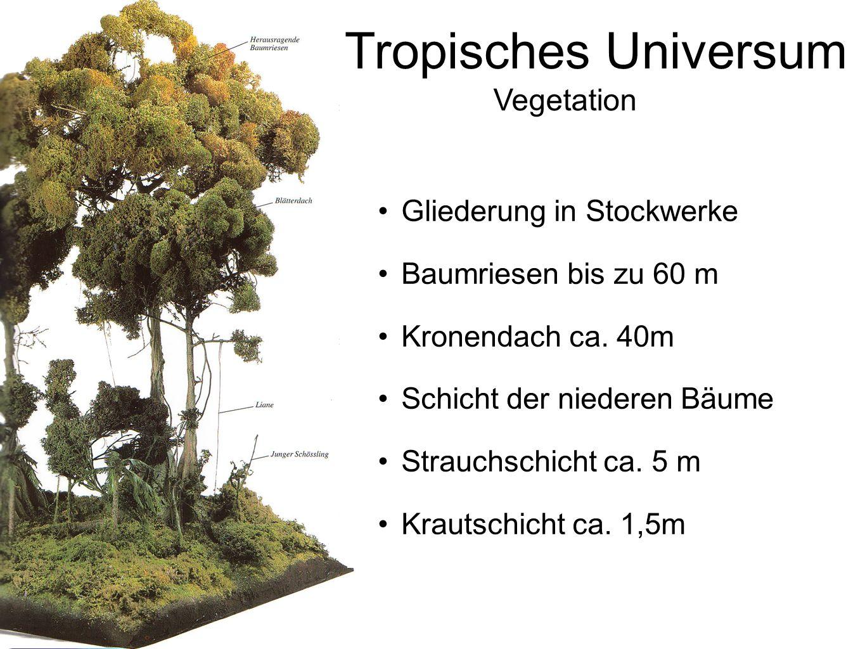 Tropisches Universum Vegetation Gliederung in Stockwerke Baumriesen bis zu 60 m Kronendach ca. 40m Schicht der niederen Bäume Strauchschicht ca. 5 m K