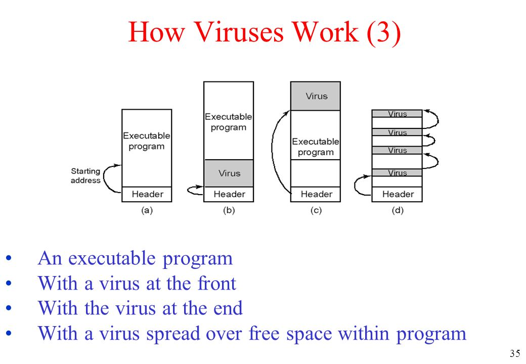 35 How Viruses Work (3) An executable program With a virus at the front With the virus at the end With a virus spread over free space within program