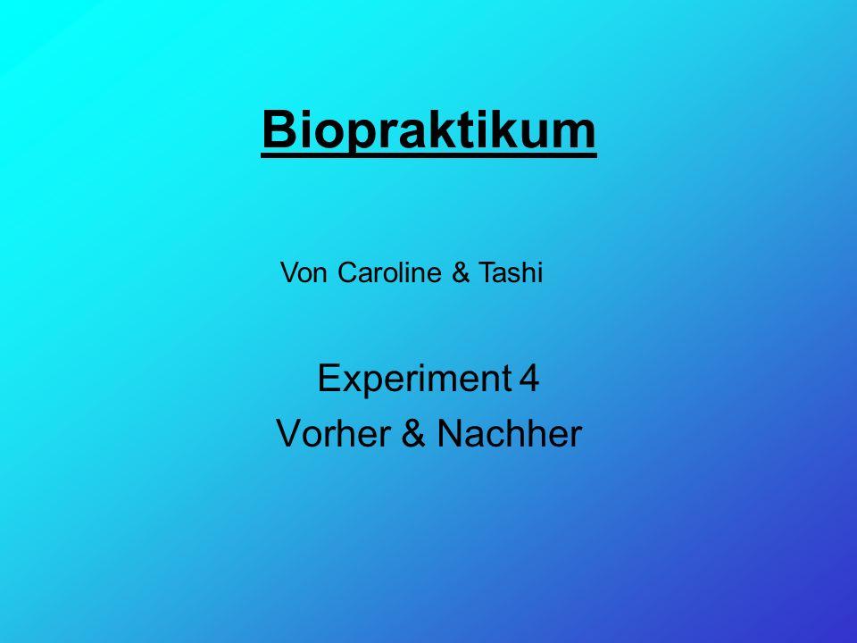 Biopraktikum Experiment 4 Vorher & Nachher Von Caroline & Tashi