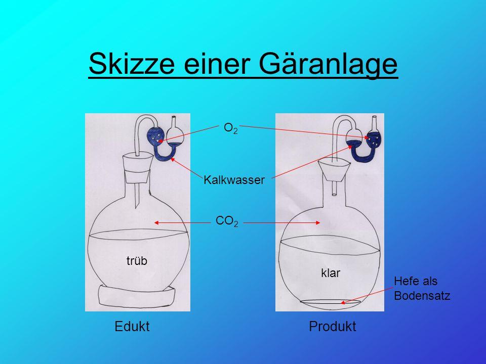 Skizze einer Gäranlage EduktProdukt trüb klar Kalkwasser Hefe als Bodensatz CO 2 O2O2
