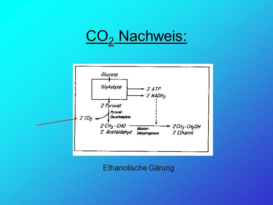 CO 2 Nachweis: Ethanolische Gärung