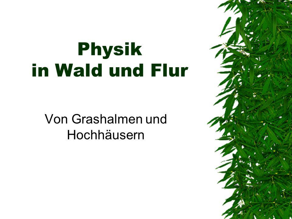 Physik in Wald und Flur Von Grashalmen und Hochhäusern