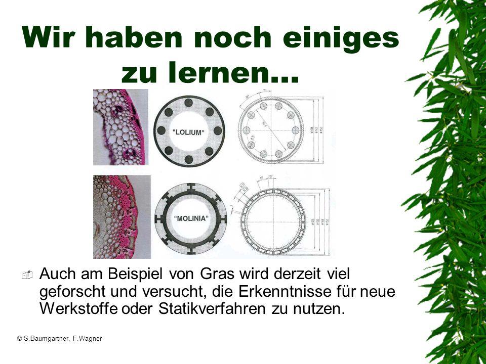 © S.Baumgartner, F.Wagner Wir haben noch einiges zu lernen... Auch am Beispiel von Gras wird derzeit viel geforscht und versucht, die Erkenntnisse für