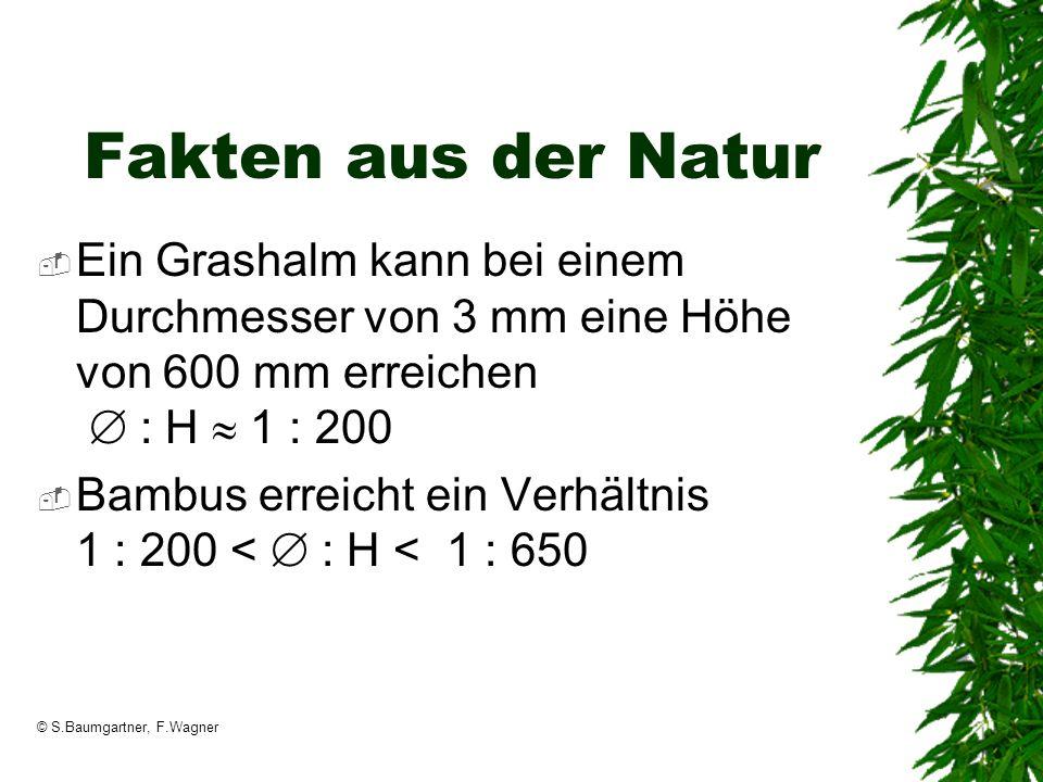 © S.Baumgartner, F.Wagner Fakten aus der Natur Ein Grashalm kann bei einem Durchmesser von 3 mm eine Höhe von 600 mm erreichen : H 1 : 200 Bambus erre