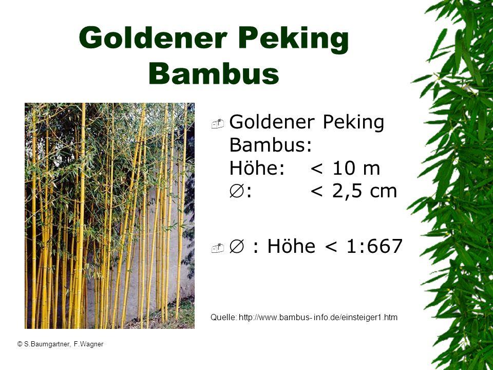 © S.Baumgartner, F.Wagner Goldener Peking Bambus Goldener Peking Bambus: Höhe: < 10 m: < 2,5 cm : Höhe < 1:667 Quelle: http://www.bambus- info.de/eins