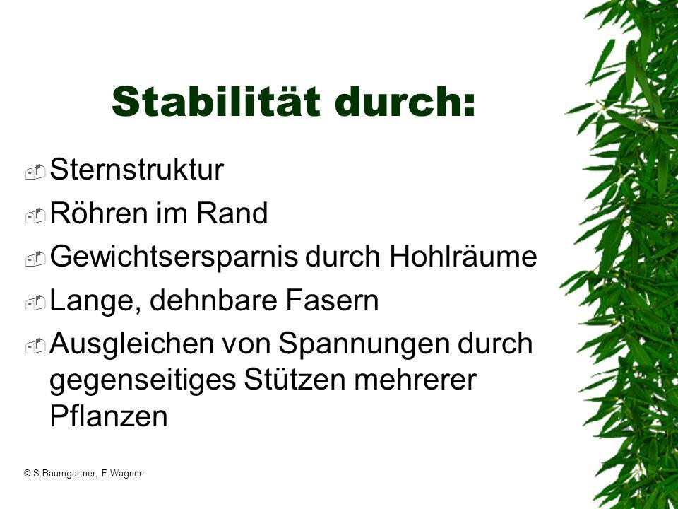 © S.Baumgartner, F.Wagner Stabilität durch: Sternstruktur Röhren im Rand Gewichtsersparnis durch Hohlräume Lange, dehnbare Fasern Ausgleichen von Span