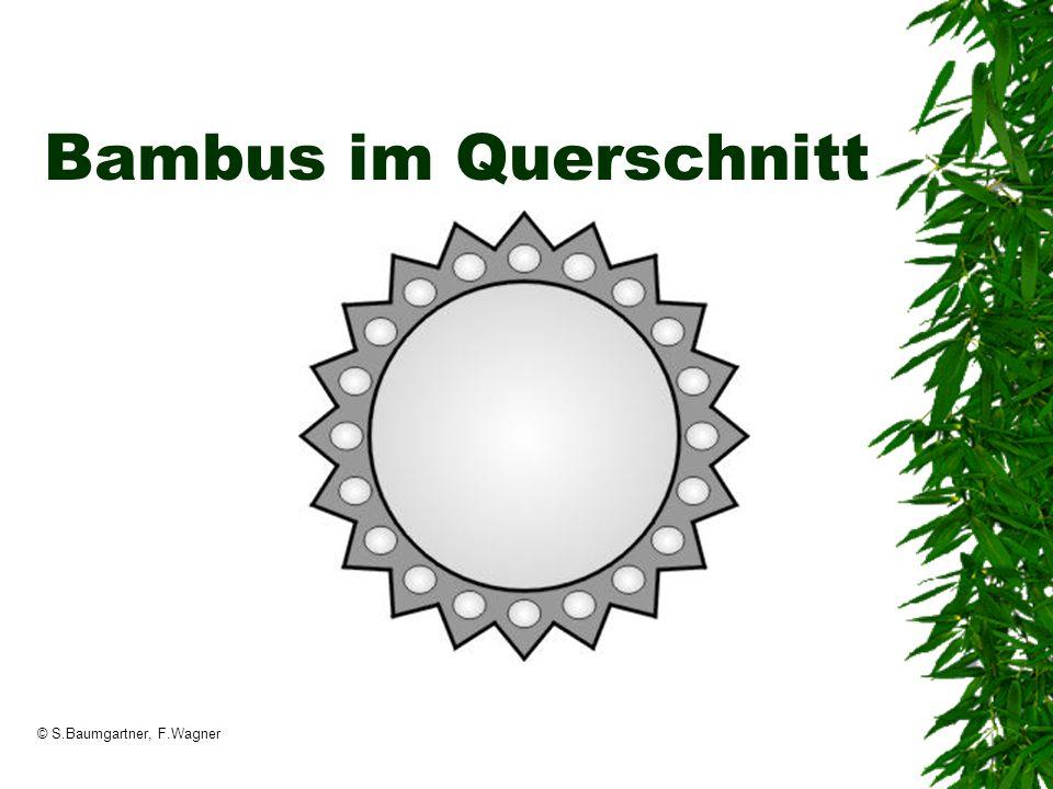 © S.Baumgartner, F.Wagner Bambus im Querschnitt