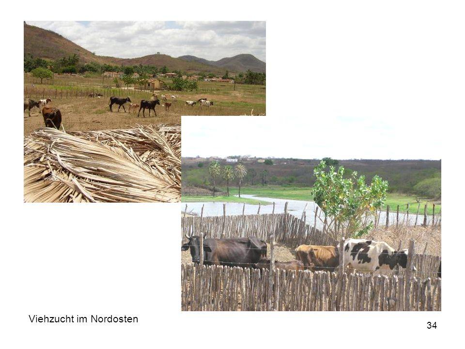 34 Viehzucht im Nordosten