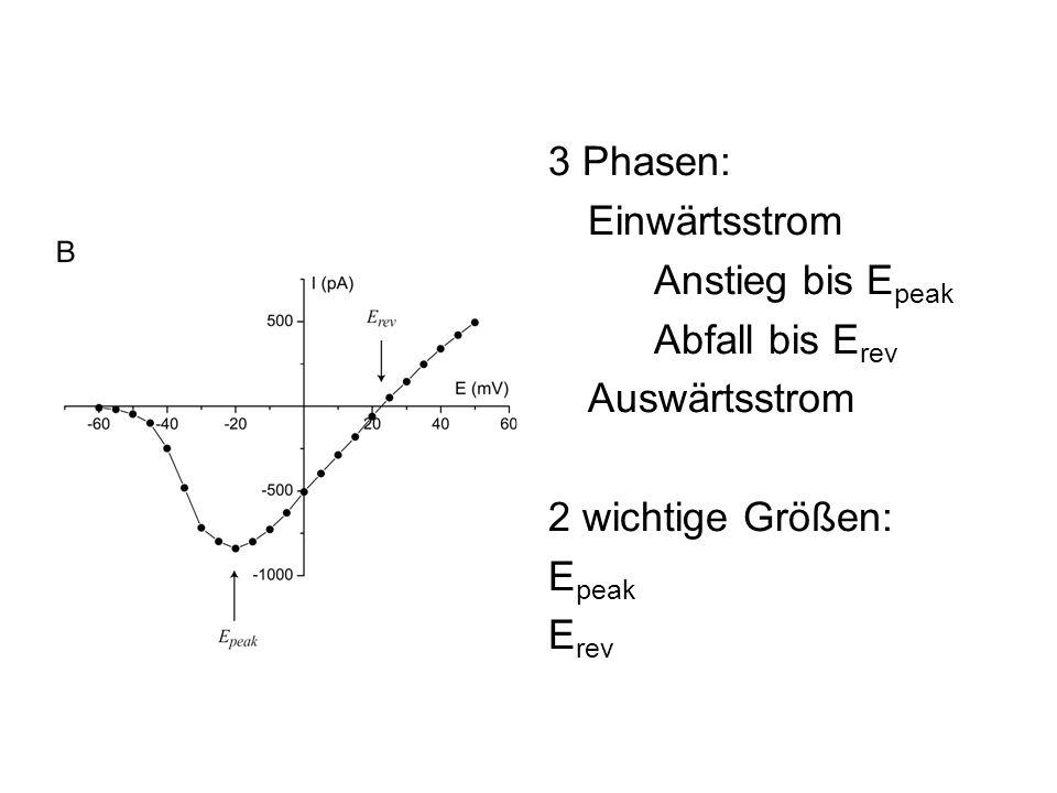 3 Phasen: Einwärtsstrom Anstieg bis E peak Abfall bis E rev Auswärtsstrom 2 wichtige Größen: E peak E rev